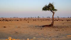 Evening light over Oman desert