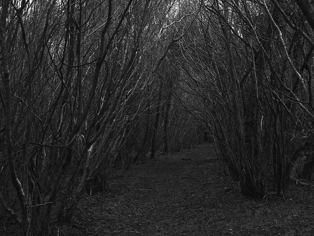 Forest Footpath on a Gloomy Winter's Day