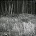 "<p><a href=""https://www.flickr.com/people/95254948@N08/"">Searcher Irl</a> posted a photo:</p>  <p><a href=""https://www.flickr.com/photos/95254948@N08/49438467881/"" title=""Cavan Burren Forest Park, Co Cavan""><img src=""https://live.staticflickr.com/65535/49438467881_bc2b465727_m.jpg"" width=""240"" height=""240"" alt=""Cavan Burren Forest Park, Co Cavan"" /></a></p>  <p>Photographed on FP4</p>"