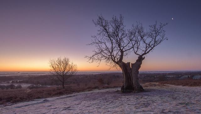 Frosty Sunrise at Bradgate