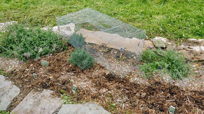 9. Cover with cardboard (temporary/decomposing weedblock)