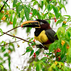 Asarí Fajado - PN Cataratas del Iguazú