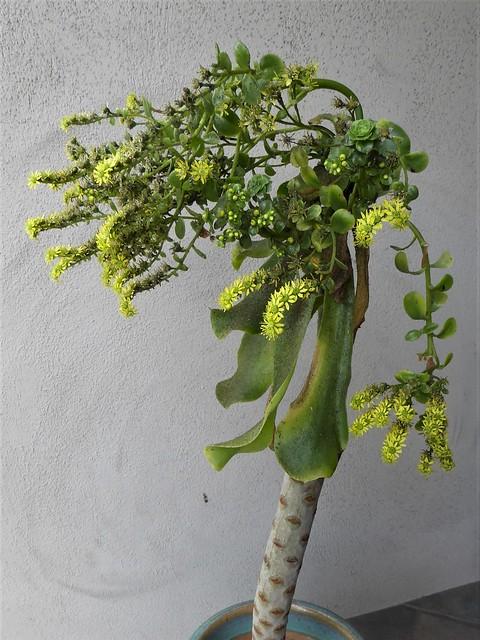 San Francisco, CA, Noe Valley, Flowering Plant
