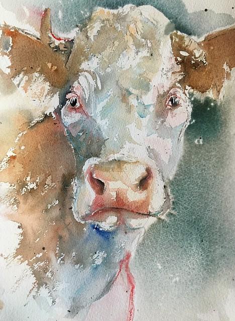 Cows 🐮