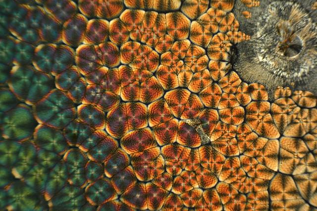 L-arginine crystals 2