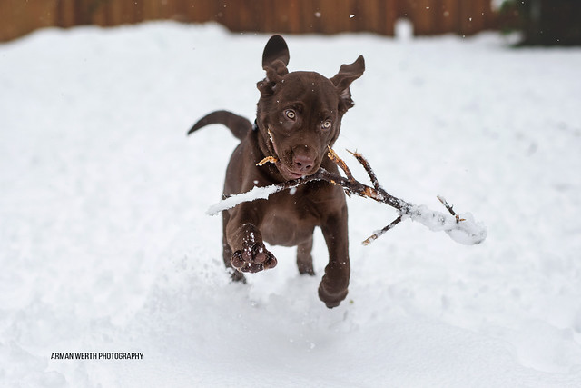 Sparky with stick