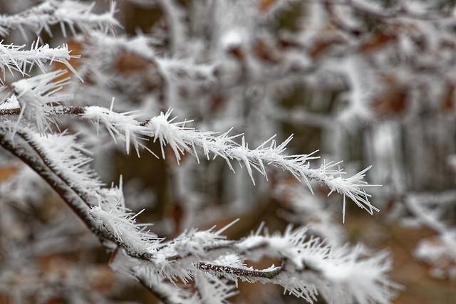 Frost auf den Bäumen