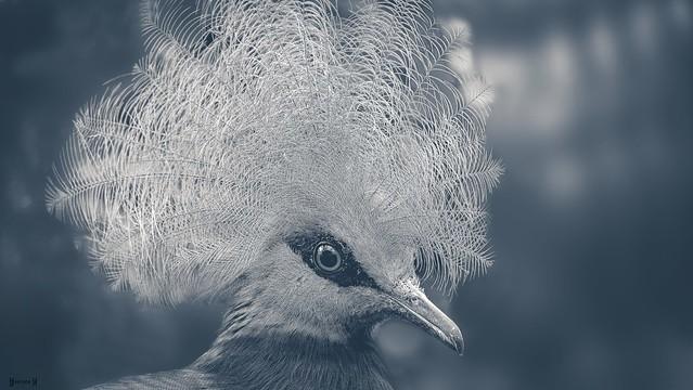 Bird - 8017