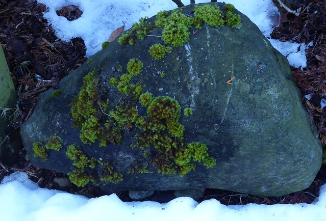 Winterliches Grün