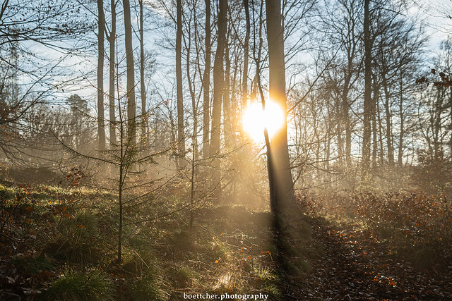 In the Morning Forest - January 2020 XV