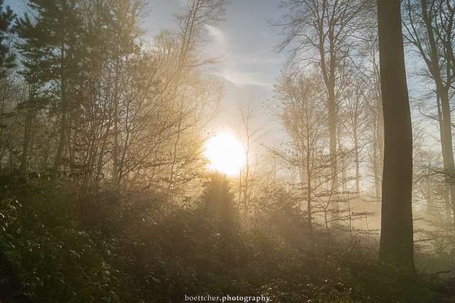 In the Morning Forest - January 2020 VIII
