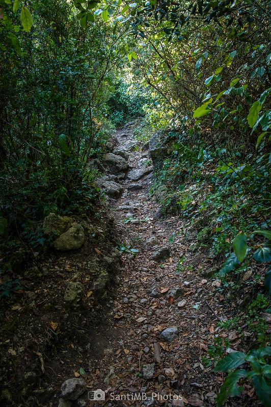Sendero a La Mussara desde el Camí de la Llódriga