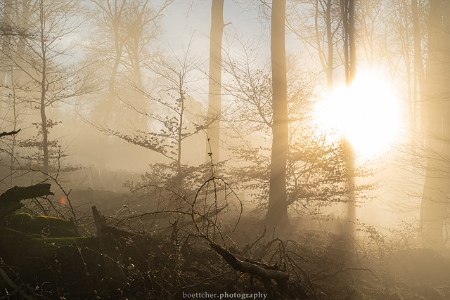 In the Morning Forest - January 2020 VII