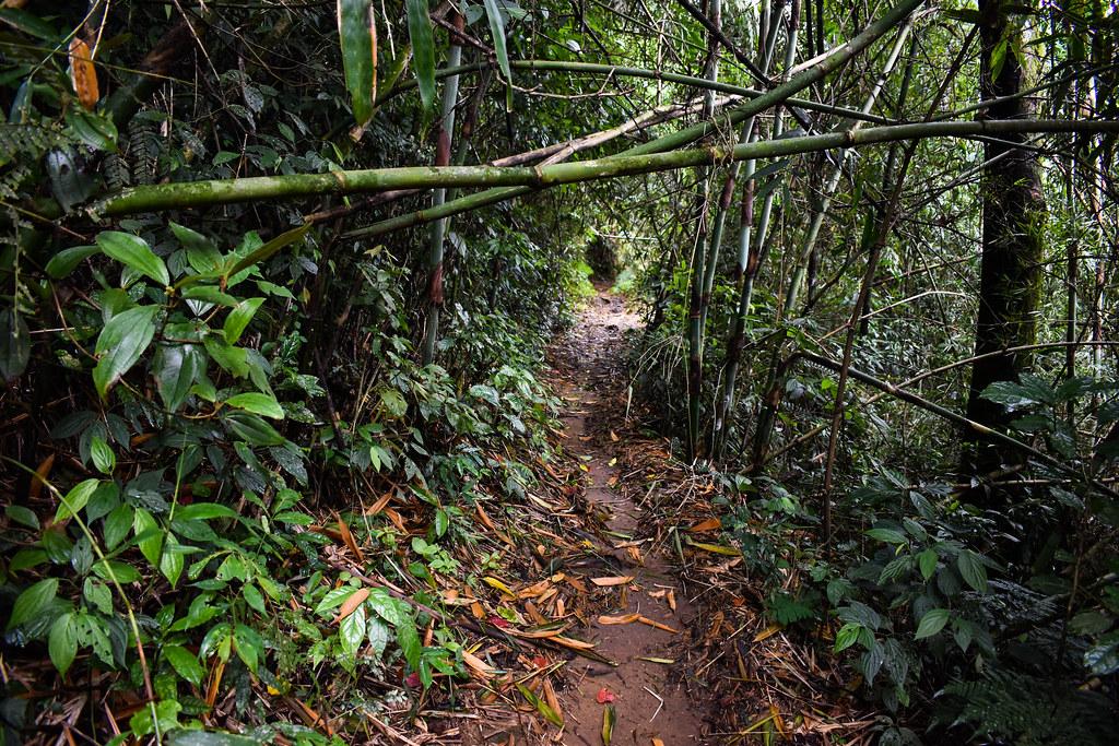 atlantic rainforest near petropolis