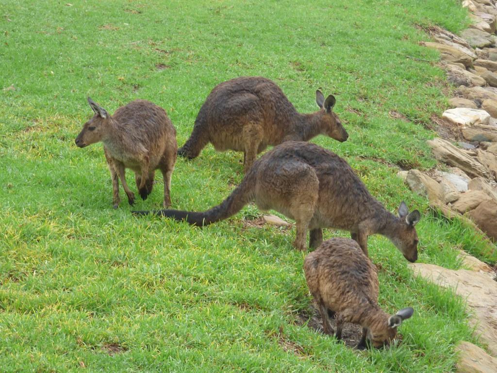 """New"" Sydney Zoo, Doonside, NSW, January 2020"