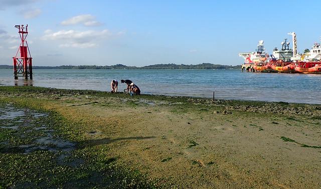 Living shores of Pasir Ris
