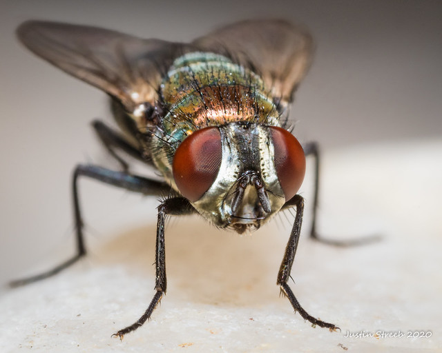 Fly Portrait Stack