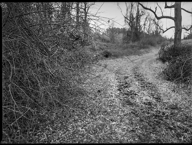 winter landscape, bare branches, rural roadway, near dusk, Biltmore Estate, Asheville, NC, Mamiya 645 Pro, Kodak Tri-X 400, Moersch Eco film developer, 1.10.20