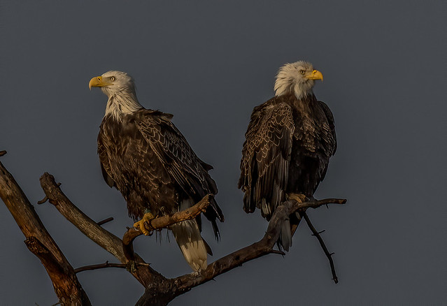 Sunset Eagles