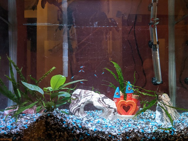 Fish Tank 1/25/20