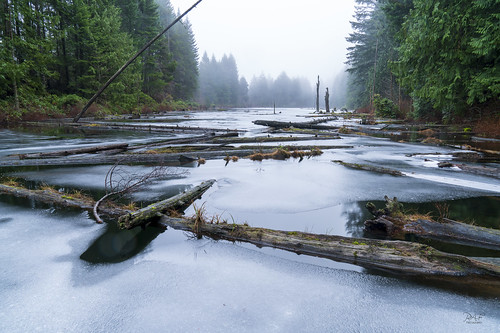 nanaimo britishcolumbia canada ice witchcraftlake log logs temperaterainforest fog foggy chaos bc vancouverisland sony sonya7r3 a7r3 sony2470f28gm landscape landscapephotography water lake