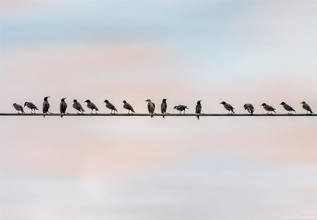 Birds on a wire at Sunset