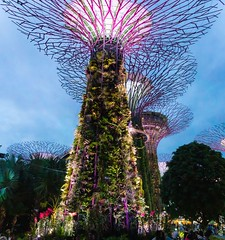Singapore / Supertree Grove