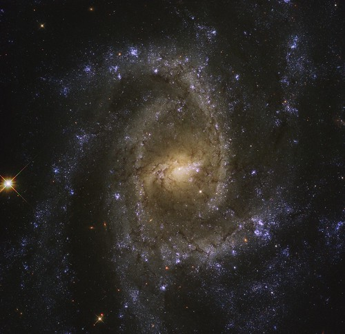 NGC 2835 | by geckzilla