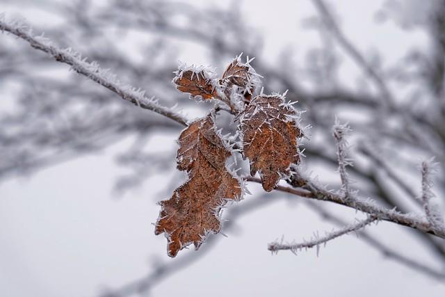 Frozen Sunday