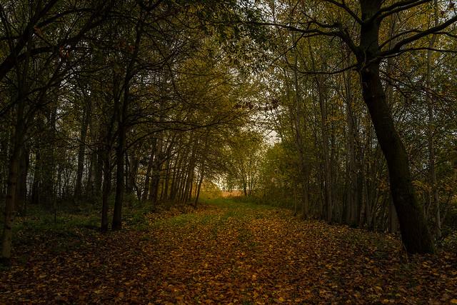 Unser Wald  (26)