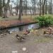 "<p><a href=""https://www.flickr.com/people/182472118@N06/"">myfirstnameisharrison</a> posted a photo:</p>  <p><a href=""https://www.flickr.com/photos/182472118@N06/49442942592/"" title=""Mandarin ducks""><img src=""https://live.staticflickr.com/65535/49442942592_5d3fd747eb_m.jpg"" width=""240"" height=""160"" alt=""Mandarin ducks"" /></a></p>"