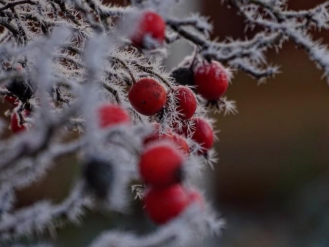 Ohne die Kälte des Winters gäbe es die Wärme des Frühlings nicht 💕