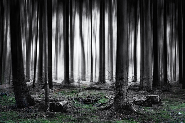 the dark forest theory