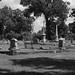 "<p><a href=""https://www.flickr.com/people/jrmorgan/"">jrpopfan</a> posted a photo:</p>  <p><a href=""https://www.flickr.com/photos/jrmorgan/49443230778/"" title=""Olivewood Cemetery""><img src=""https://live.staticflickr.com/65535/49443230778_4ef2f7c8d6_m.jpg"" width=""240"" height=""160"" alt=""Olivewood Cemetery"" /></a></p>  <p>Photos from an expedition to Olivewood Cemetery in Houston</p>"