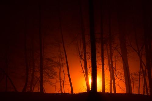 trees forest winter fog mist silhouette minimal minimalism landscape