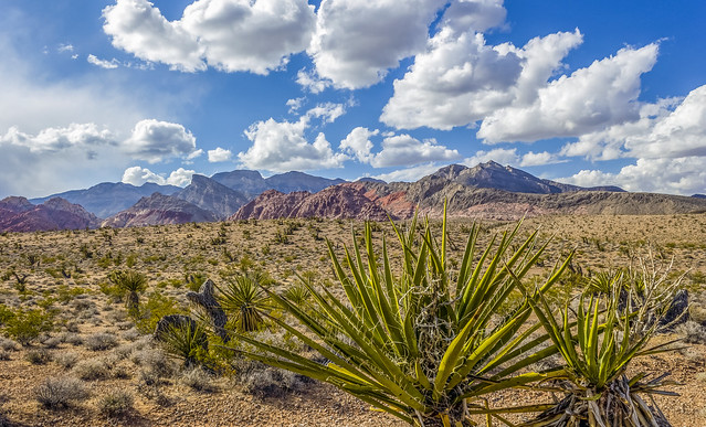 Chance Of A Shower (Red Rock Canyon, Nevada, USA)