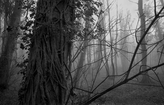 Wombourne woods.