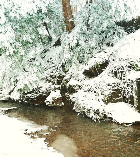 Woodland stream in winter #ChestnutRidge #wny #orchardpark #winter #nature #hiking #trees #stream #runningwater #snow