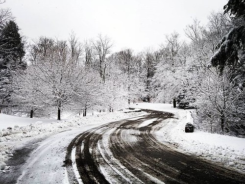 Wintry road #ChestnutRidge #wny #orchardpark #winter #nature #hiking #trees #snow