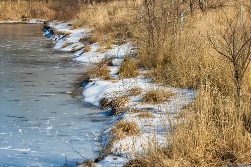 frozen lake water vegetation dry winter sunny melting landscape stoeversdampark lebanonpa pennsylvania ef70300mmf456isiiusm milliecruz canoneosrebelt6i