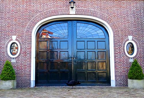 """Black swan sleeping in frontn of the Coach house """"Huize de Laak"""""""