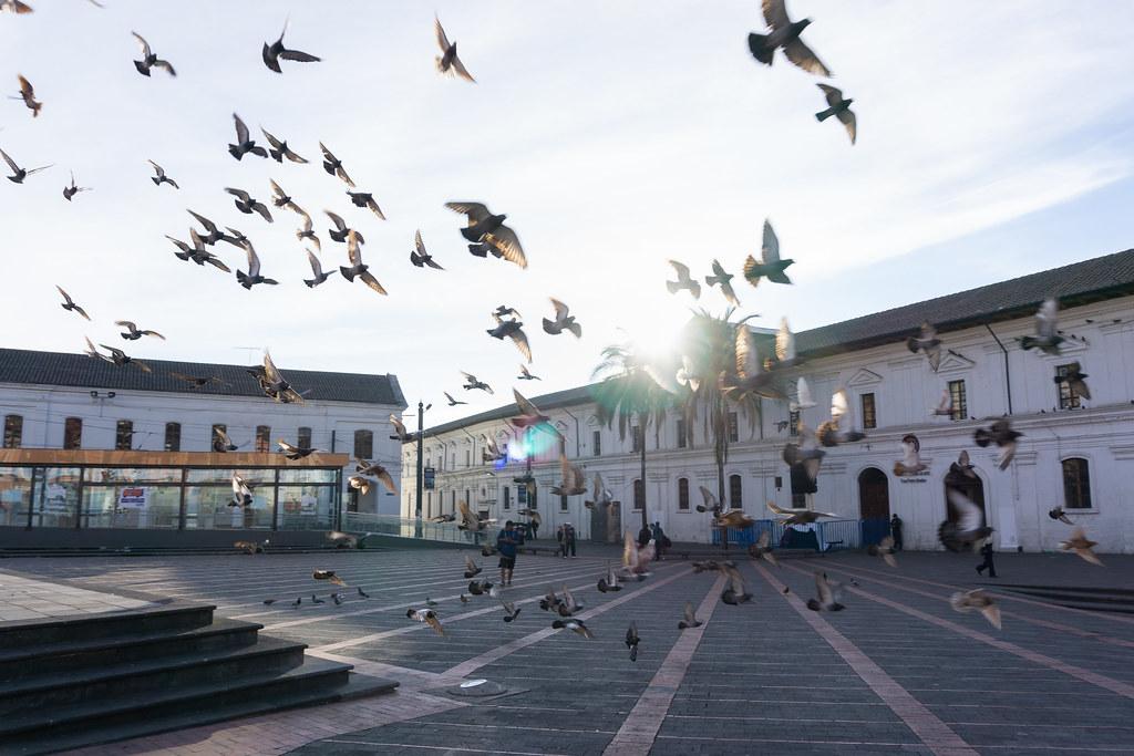 Quito flying doves / palomas volando