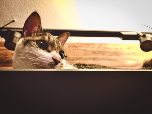多多Cat.....☺️😇😊