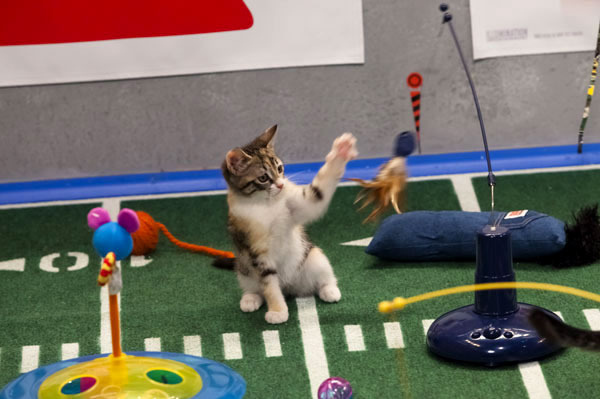 Animal Planet Puppy Bowl XVI