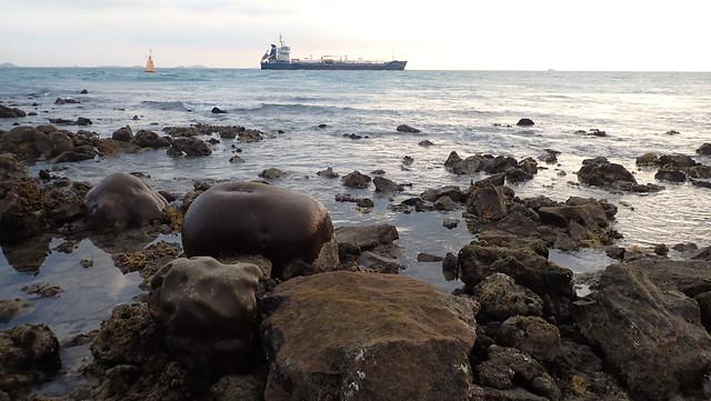 Living shores of Big Sisters Island