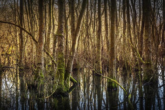 Bolam Lake Country Park, Northumberland