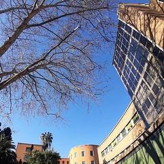#Buongiorno Sapienza con una foto dell'Edificio di Botanica e genetica di @robertosciarr1 #Repost: «@sapienzaroma #inblue :blue_heart: #SAPIENZAUNIVERSITÀDIROMA #sapienza #università #lavoro #roma #sapienzaroma» #repostSapienza #ImmaginiDallaSapienza di #