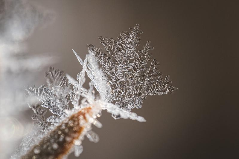 Snowflake|雪花