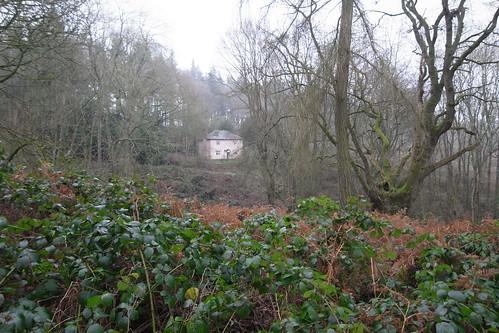 Croft Castle Woods