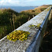 ODC Cliff rail with Lichen (Looong) (2)